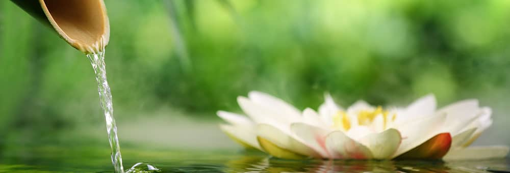 Lotus Homeopathy