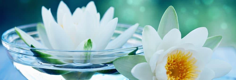 Lotus Homeopathy